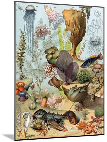 Life on the Sea Floor, Including Crustaceans and Molluscs--Mounted Giclee Print