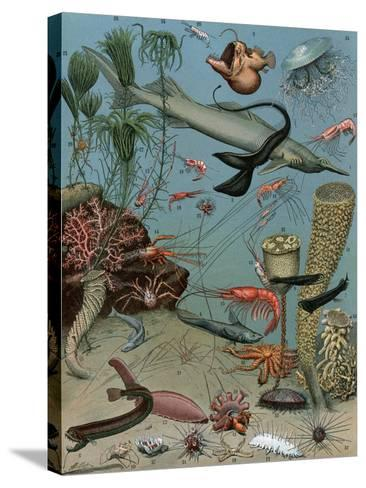 Creatures of the Sea Floor, Including Fish, Starfish, Sea Urchins, Crustaceans, Polyps--Stretched Canvas Print