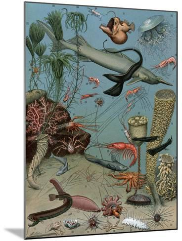 Creatures of the Sea Floor, Including Fish, Starfish, Sea Urchins, Crustaceans, Polyps--Mounted Giclee Print
