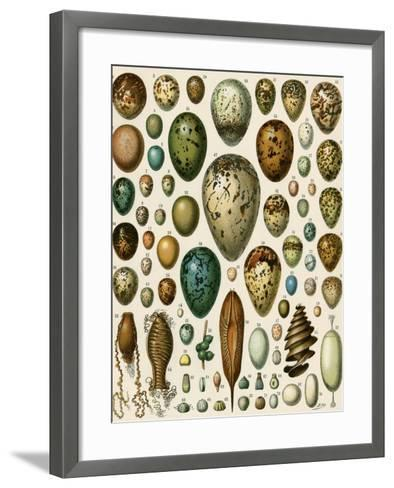 Eggs of Some Birds and Turtles, and Seed Cases of Bryophites and Some Other Plants--Framed Art Print