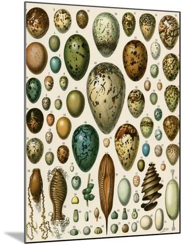 Eggs of Some Birds and Turtles, and Seed Cases of Bryophites and Some Other Plants--Mounted Giclee Print