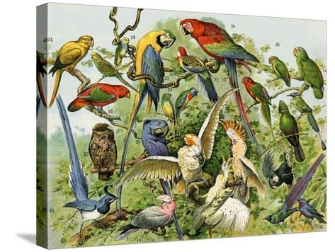 Parrots, Cockatoos, and Other Jungle Birds--Stretched Canvas Print