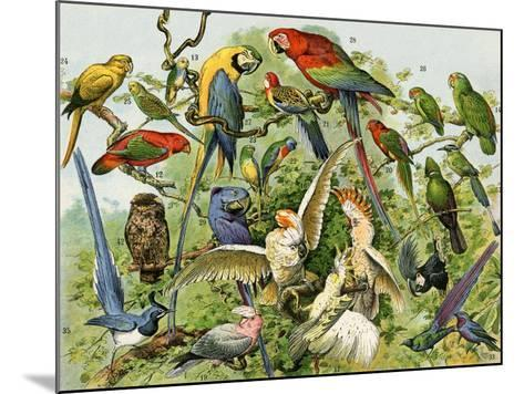 Parrots, Cockatoos, and Other Jungle Birds--Mounted Giclee Print