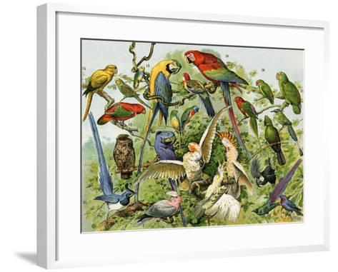 Parrots, Cockatoos, and Other Jungle Birds--Framed Art Print