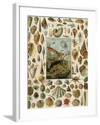 Varieties of Molluscs, Including Scallop, Clam, Conch, Snail, and Squid--Framed Art Print
