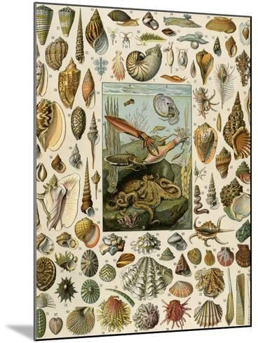 Varieties of Molluscs, Including Scallop, Clam, Conch, Snail, and Squid--Mounted Giclee Print