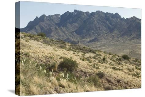 Florida Mountains of the Mexico Borderland Seen From Rockhound State Park, New Mexico--Stretched Canvas Print