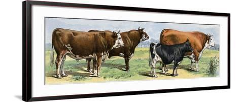 European Beef Cattle and a Dairy Cow--Framed Art Print