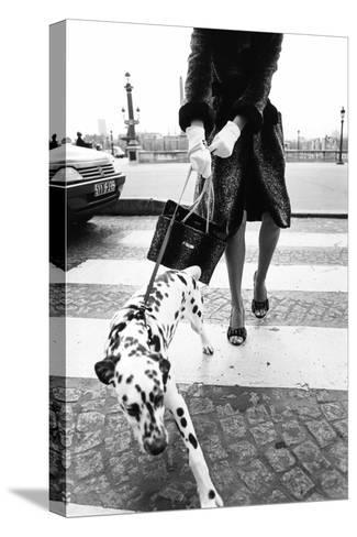 Dalmatian on a Leash-Walter Chin-Stretched Canvas Print