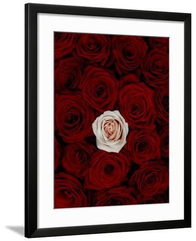 Red and Pink Roses-Graeme Montgomery-Framed Art Print