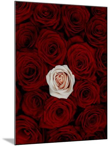 Red and Pink Roses-Graeme Montgomery-Mounted Photographic Print