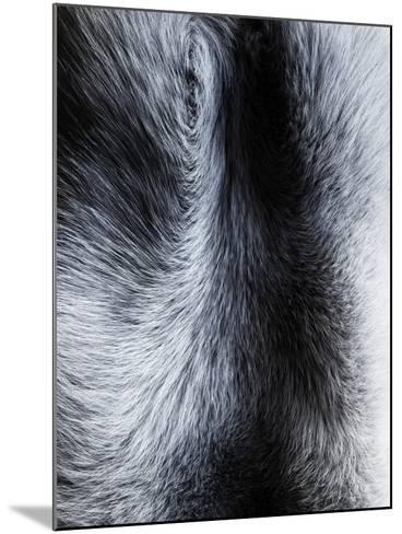 Fur Close-up II-Graeme Montgomery-Mounted Photographic Print