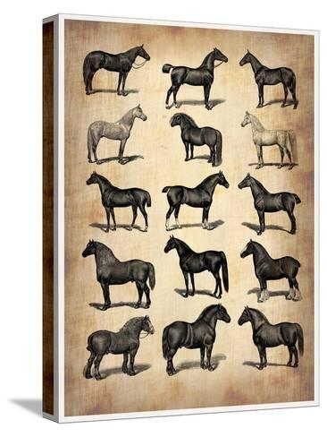 Vintage Horses Collection-NaxArt-Stretched Canvas Print
