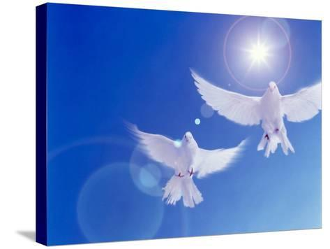 Two Doves Side by Side with Wings Outstretched in Flight with Brilliant Light And Blue Sky--Stretched Canvas Print