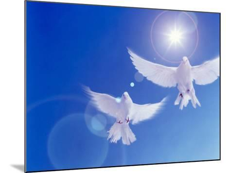 Two Doves Side by Side with Wings Outstretched in Flight with Brilliant Light And Blue Sky--Mounted Photographic Print