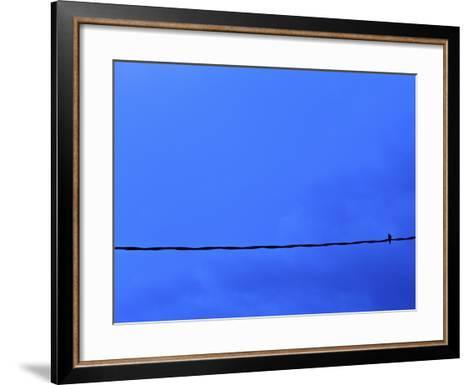 Dove on a Wire--Framed Art Print