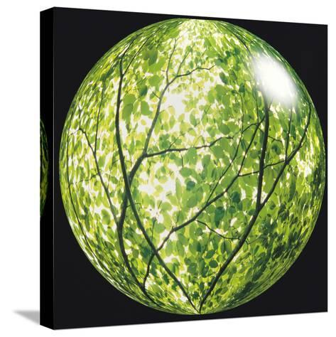 View of Tree in Sphere--Stretched Canvas Print
