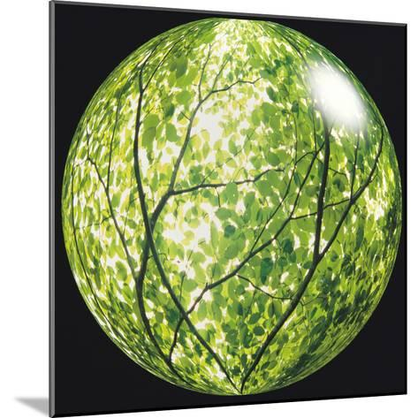 View of Tree in Sphere--Mounted Photographic Print