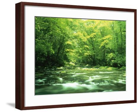 Stream Flowing Through a Forest--Framed Art Print