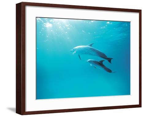 Two Spinner Dolphins--Framed Art Print