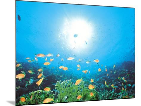School of Fish And Sunlight, Undersea View--Mounted Photographic Print