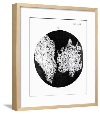 Drawing of Cork Under Microscope by Robert Hooke-Jeremy Burgess-Framed Art Print