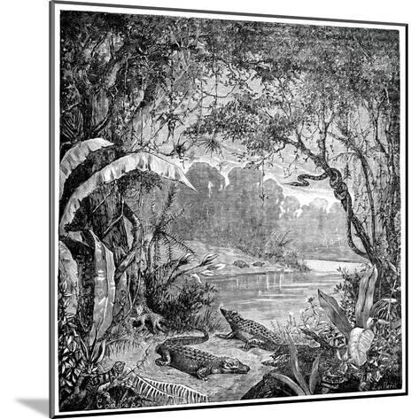Tropical Plants And Reptiles-Science Photo Library-Mounted Giclee Print
