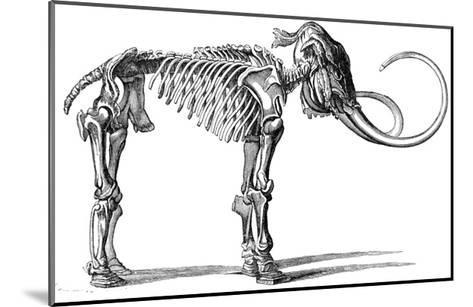 Oncoul Mammoth, 19th Century Artwork-Science Photo Library-Mounted Giclee Print