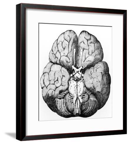 Illustration of Blood Supply To the Brain,C.Wren-Science Photo Library-Framed Art Print