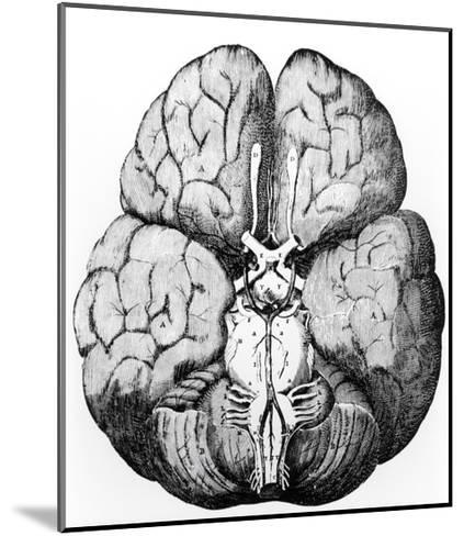 Illustration of Blood Supply To the Brain,C.Wren-Science Photo Library-Mounted Giclee Print