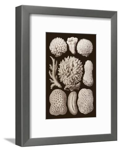 Arabian Corals, Historical Artwork, 1876-Mehau Kulyk-Framed Art Print
