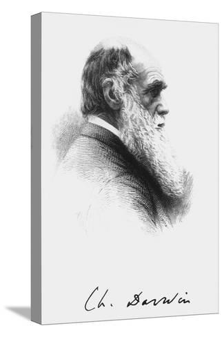 Portrait of English Naturalist Charles Darwin-Science Photo Library-Stretched Canvas Print
