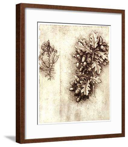 Leonardo Da Vinci's Oak Leaves And Acorns-Sheila Terry-Framed Art Print