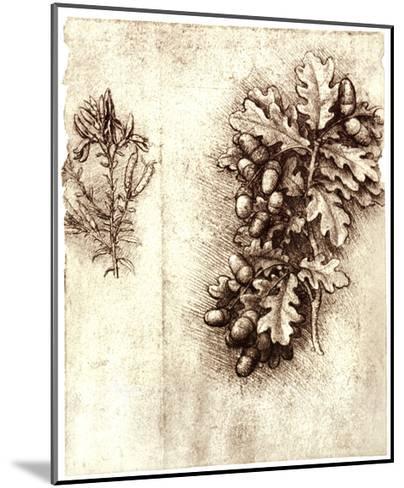 Leonardo Da Vinci's Oak Leaves And Acorns-Sheila Terry-Mounted Giclee Print