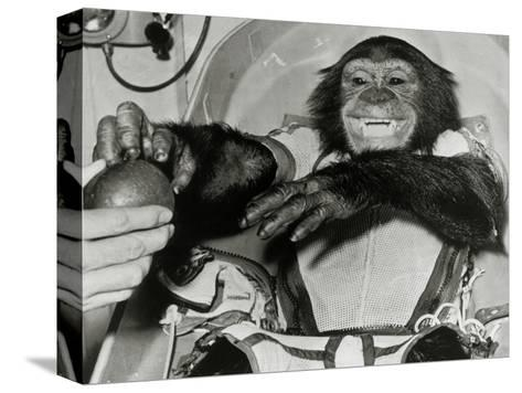 Chimp Ham After Mercury MR2 Flight--Stretched Canvas Print