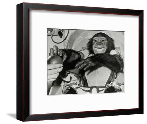Chimp Ham After Mercury MR2 Flight--Framed Art Print