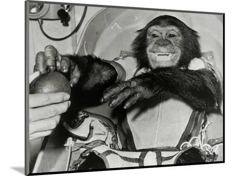 Chimp Ham After Mercury MR2 Flight--Mounted Giclee Print