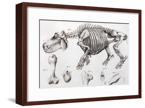1812 Hippopotamus Skeleton by Cuvier-Stewart Stewart-Framed Art Print