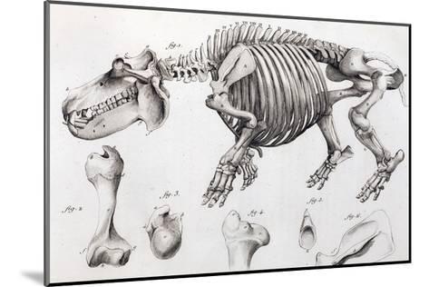 1812 Hippopotamus Skeleton by Cuvier-Stewart Stewart-Mounted Giclee Print