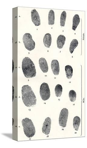 Sets of Fingerprints-Sheila Terry-Stretched Canvas Print