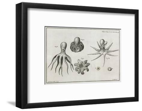 Octopus Anatomy, 18th Century-Middle Temple Library-Framed Art Print