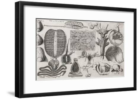 Biological Illustrations, 17th Century-Middle Temple Library-Framed Art Print