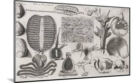 Biological Illustrations, 17th Century-Middle Temple Library-Mounted Giclee Print