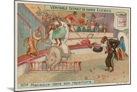 Circus of Monkeys--Mounted Giclee Print