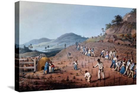 Breaking Up the Land, from 'ten Views in the Island of Antigua', 1823-William Clark-Stretched Canvas Print