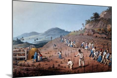 Breaking Up the Land, from 'ten Views in the Island of Antigua', 1823-William Clark-Mounted Giclee Print