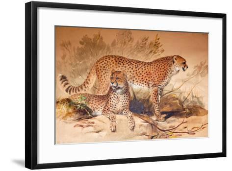 Cheetah, 1851-52-Joseph Wolf-Framed Art Print