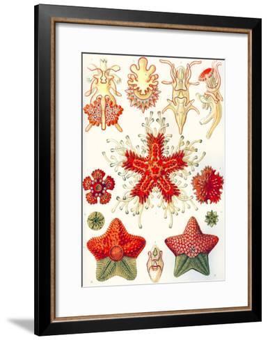 Asteridea 'Kunstformen Der Natur', 1899-Ernst Haeckel-Framed Art Print