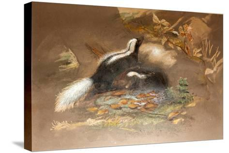 American Skunk-Joseph Wolf-Stretched Canvas Print
