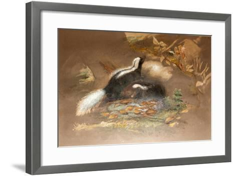 American Skunk-Joseph Wolf-Framed Art Print